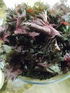 旬の野菜〜赤しそジュースでパワーいただきます!