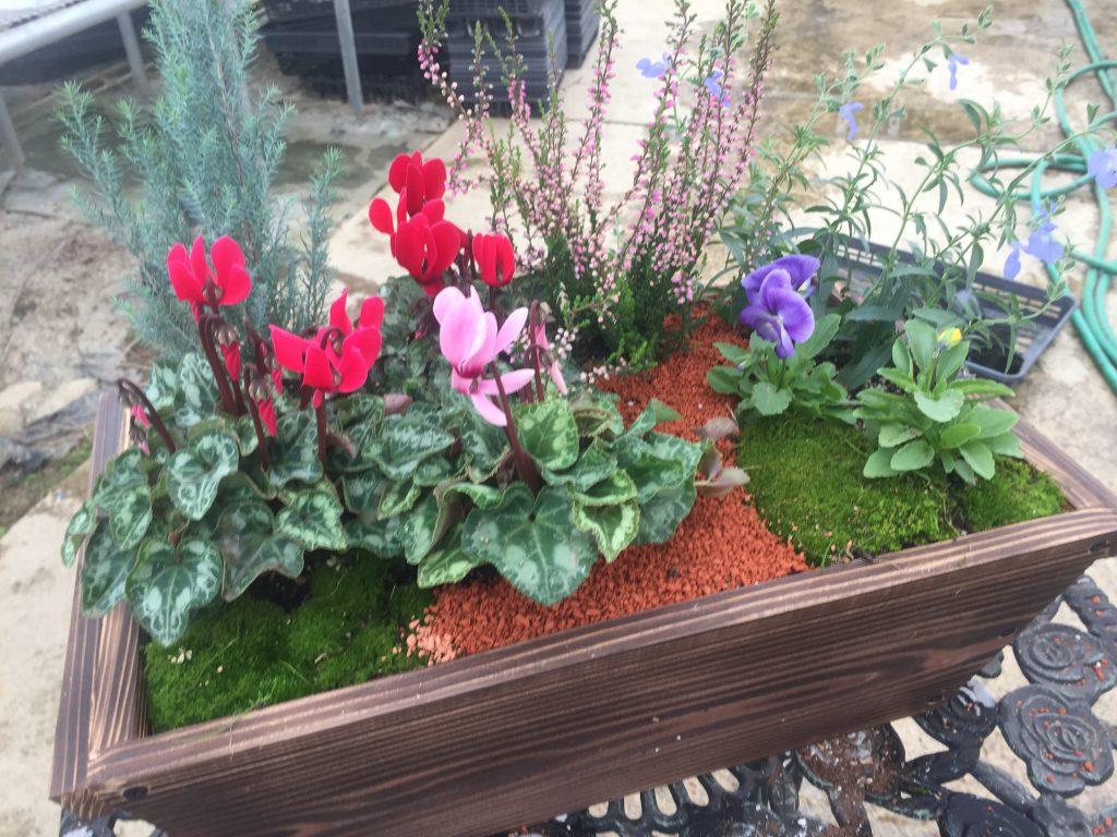 豊かに暮らす、冬支度の始めは庭いじりから〜お花の水やりのタイミングについて