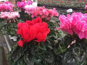 私のお花の寄せ植え講座は、前座のお話が面白い!10万のフォトリーディング講座に驚きとその後