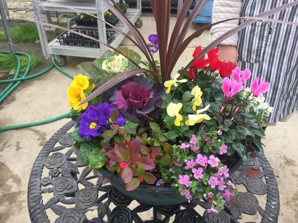 寄せ植えをする際のポイントは鉢選びです〜玄関の灯が恋しい季節に、ホットできるようなそんな花をイメージして
