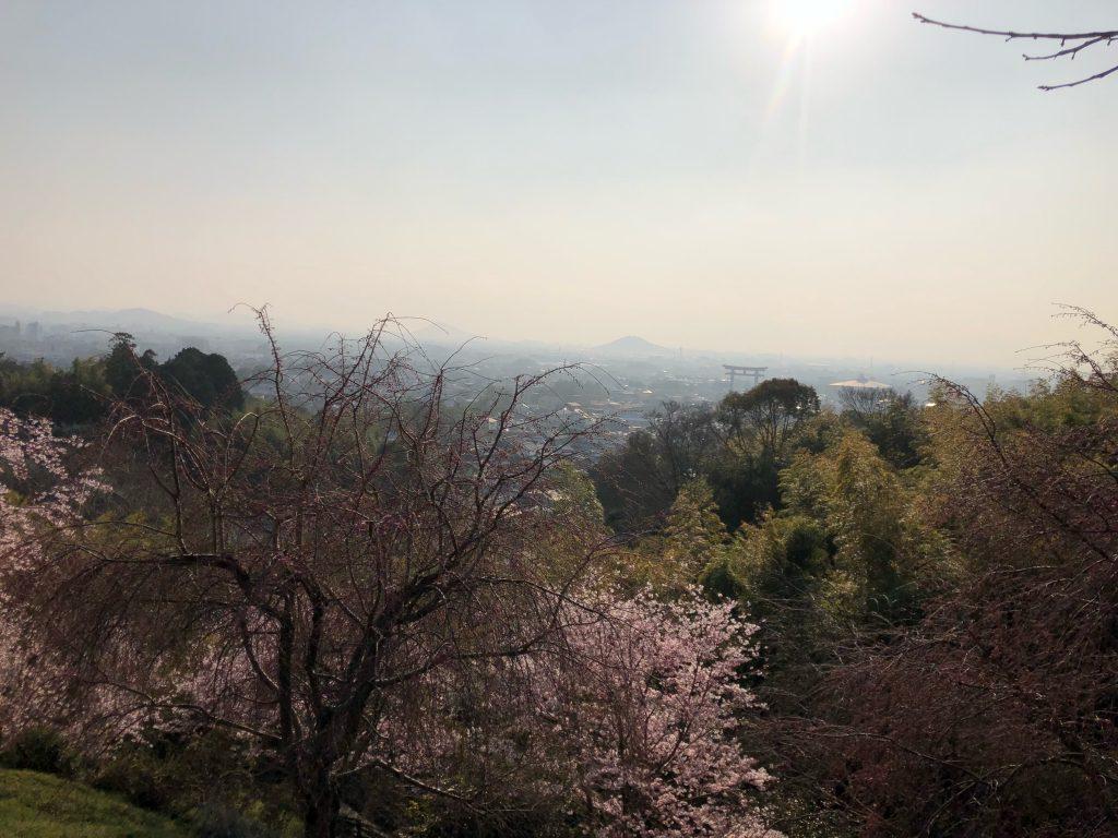 さくら咲く、大神神社登拝出来たことの喜び