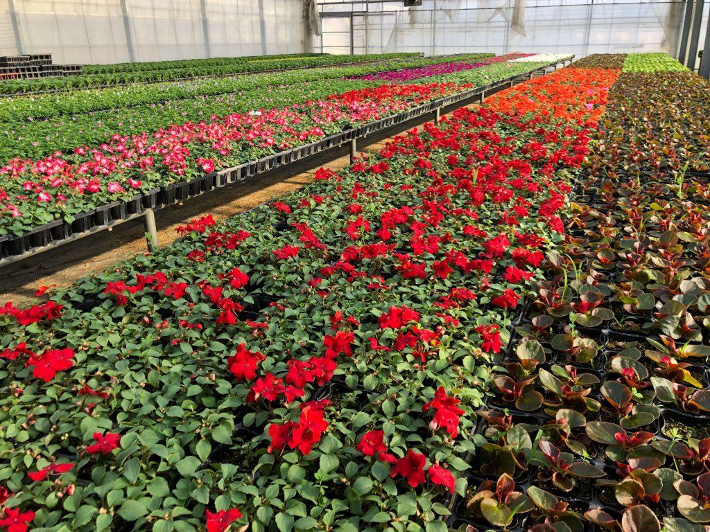 農業はマルチプレイヤーである〜花作りという職業から、学んだこと